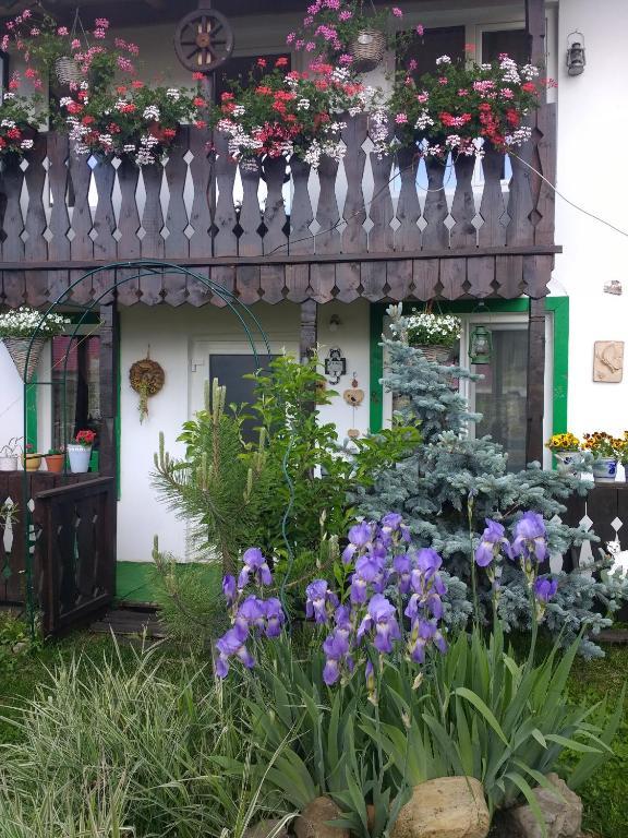Căsuța verde